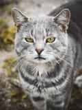 Визирование кота Стоковое Фото