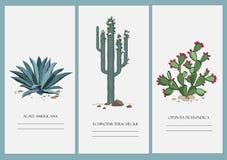 Визитные карточки установили с кактусом, столетником, и заводом шиповатой груши Стоковые Фото