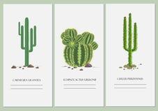 Визитные карточки установленные с дизайном кактуса Стоковое Фото