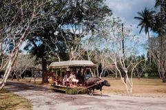 Вилла Escudero езды тележки азиатского буйвола, Tiaong, Сан Pablo, Филиппины Стоковые Изображения RF
