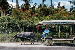 Вилла Escudero езды тележки азиатского буйвола, Tiaong, Сан Pablo, Филиппины Стоковое фото RF