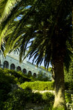 вилла palmae s сада arecaceae стоковая фотография rf