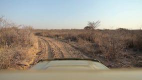 Виллис путешествует вдоль песочной дороги между кустами акции видеоматериалы
