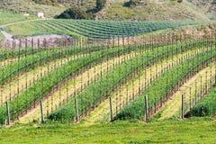 винзавод california Стоковые Изображения