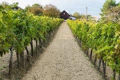 Винный погреб и виноградные лозы в винодельческом регионе Balaton, Венгрии стоковое фото rf
