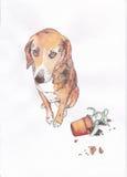 Виновная собака на белой предпосылке Стоковое Фото