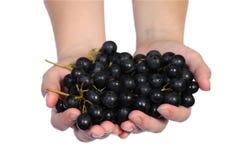 виноградина вручает лозу Стоковые Изображения