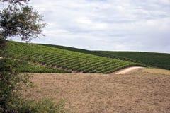виноградина засаживает вино долины sonoma стоковое изображение rf