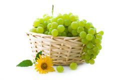 виноградина корзины стоковая фотография