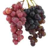 виноградина плодоовощ Стоковая Фотография RF