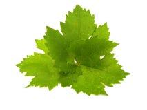 виноградина покрывает 3 стоковое фото rf