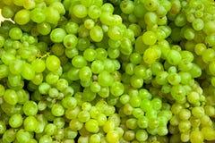 виноградина предпосылки Стоковые Изображения
