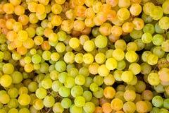 виноградина предпосылки Стоковые Фото