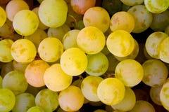 виноградина предпосылки Стоковое фото RF
