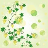виноградина предпосылки Стоковые Изображения RF