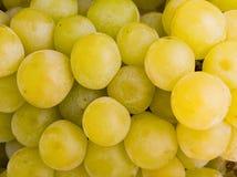виноградина предпосылки Стоковая Фотография RF