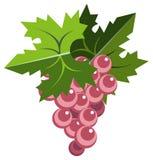 виноградина пука выходит пинк Стоковое Фото