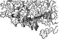 виноградина штанги Стоковые Изображения RF
