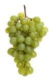 виноградина стоковая фотография
