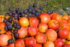 виноградина 3 яблок Стоковые Фото