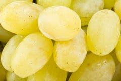 Виноградины белые на белизне Стоковая Фотография