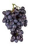 виноградины ветви изолировали белизну Стоковые Изображения RF