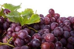 виноградины ветви Стоковое фото RF