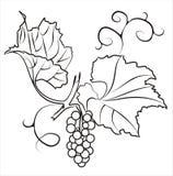 виноградины ветви иллюстрация штока