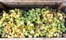 Виноградины вина в деревянной коробке стоковые изображения