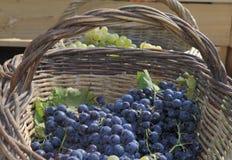 Виноградины вина в корзинах wicker стоковая фотография