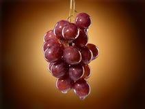 виноградины влажные стоковые изображения rf
