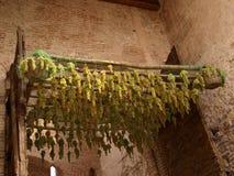 виноградины засыхания стоковое фото rf