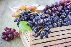 виноградины зрелые стоковая фотография rf