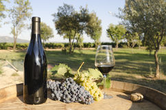 Виноградины и вино Стоковые Фотографии RF
