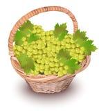 виноградины корзины белые Иллюстрация вектора сбора сезона реалистическая Стоковые Фото
