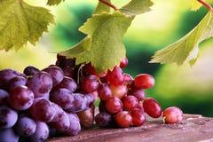 Виноградины на листьях деревянного стола и виноградины Здоровые виноградины вина свежих фруктов Стоковое Фото