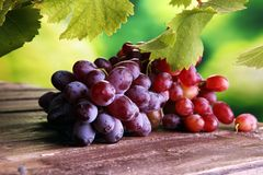 Виноградины на листьях деревянного стола и виноградины Здоровые виноградины вина свежих фруктов Стоковое фото RF