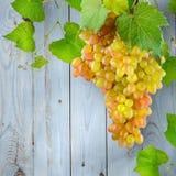 Виноградины пука с зеленым цветом выходят против света предпосылки - синь сватает Стоковые Изображения