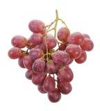 виноградины пука Стоковая Фотография