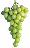 виноградины пука Стоковые Изображения