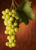 виноградины пука Стоковое фото RF