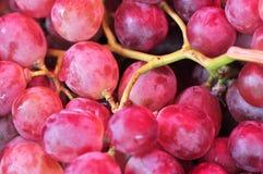 виноградины пука Стоковые Изображения RF