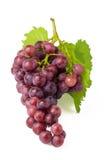 виноградины пука Стоковое Изображение RF