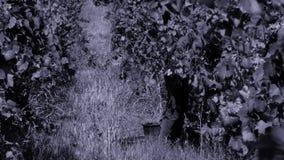 Виноградины рудоразборки женщины в осени видеоматериал