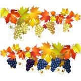 Виноградины с листьями бесплатная иллюстрация