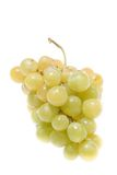 виноградины стоковые изображения