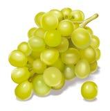 виноградины иллюстрация штока