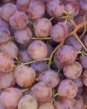 Виноградины Garnacha Стоковые Изображения RF