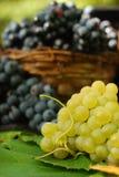виноградины luscious Стоковое Изображение RF