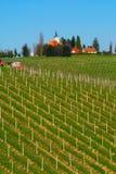 Виноградники весной, Словения стоковые изображения rf